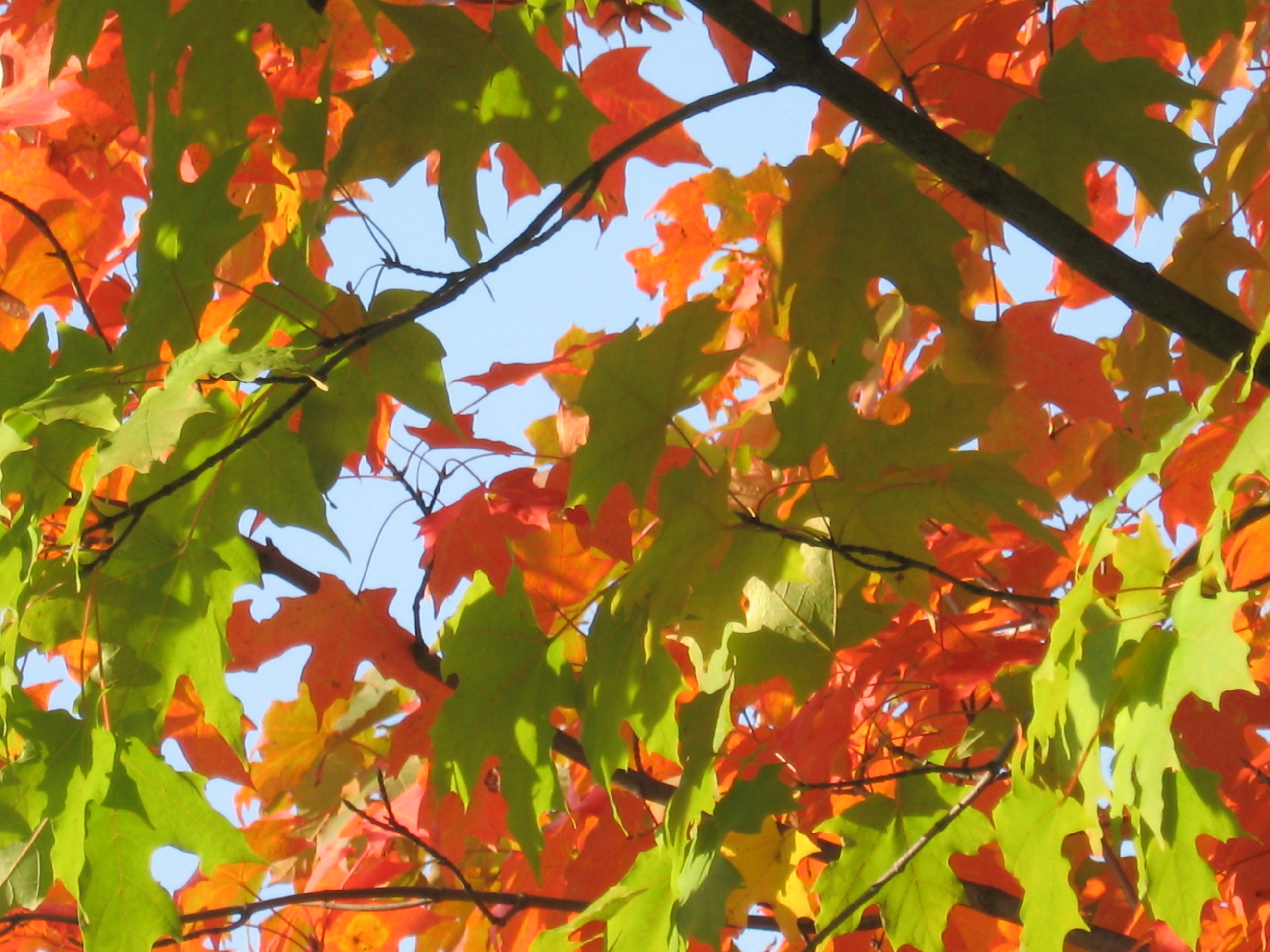 summer fall