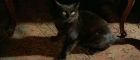 black cat cap 01